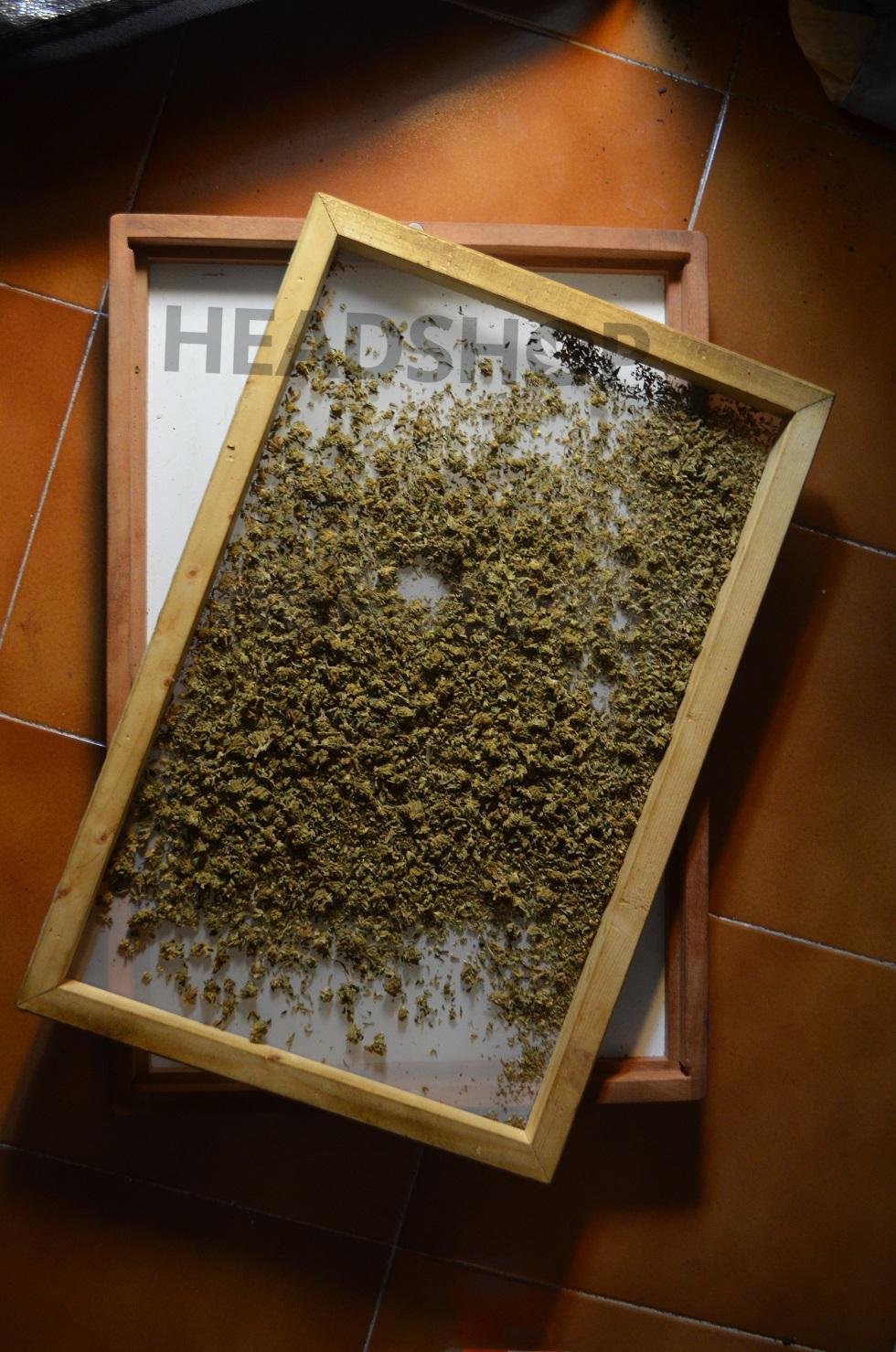 Tan Tam lleno de marihuana resinosa