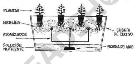 Sistema de cultivo aeropónico