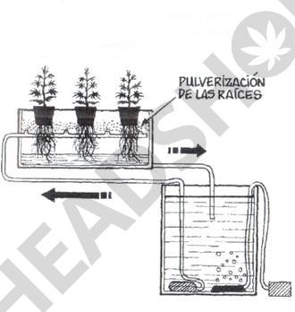 Sistema de cultivo hidropónico