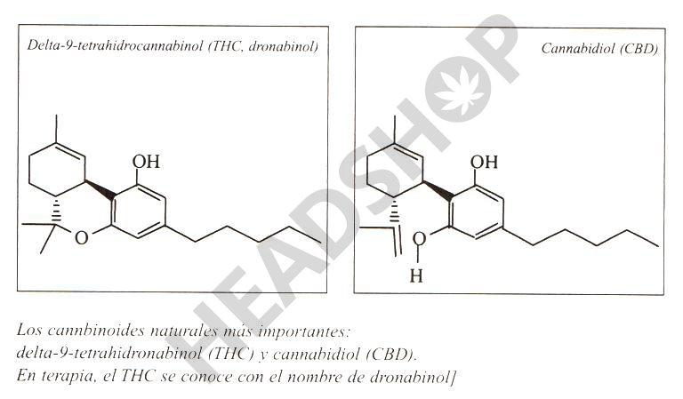 los cannabinoides medicinales