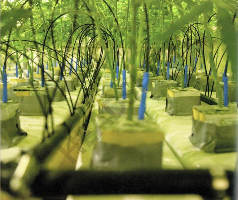 La importancia del riego en el cultivo hidropónico