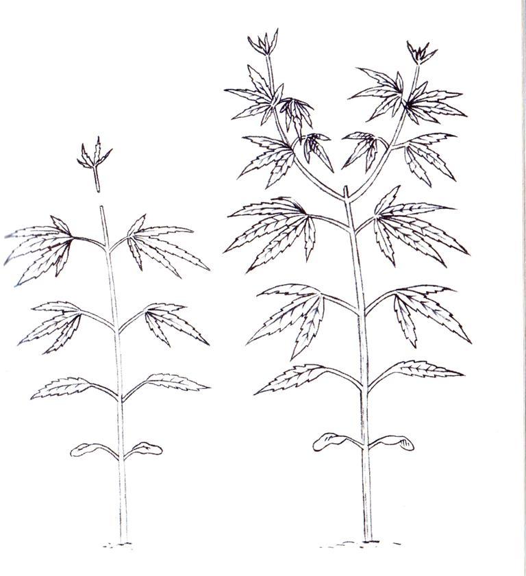 Quieres saber como podar bien las plantas?